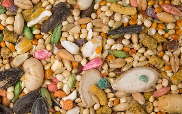 دانههای مورد علاقه عروس هلندی